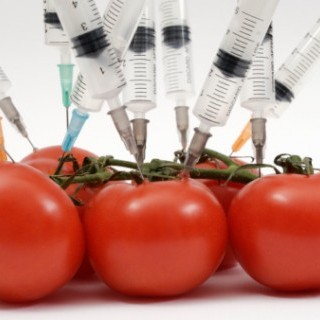 Τροφική δυσανεξία και γενετικά τροποποιημένα τρόφι